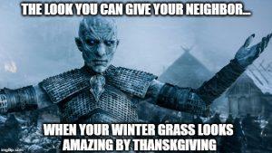 winter-grass-planting-arizona